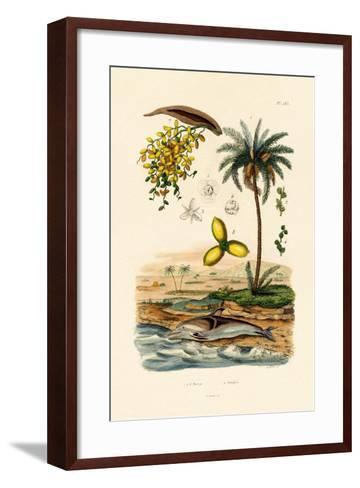 Date Palm, 1833-39--Framed Art Print
