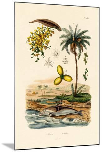 Date Palm, 1833-39--Mounted Giclee Print