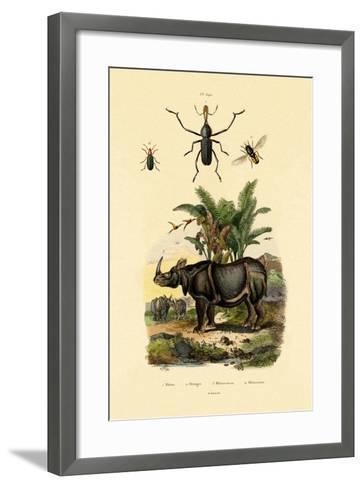 Hoverfly, 1833-39--Framed Art Print