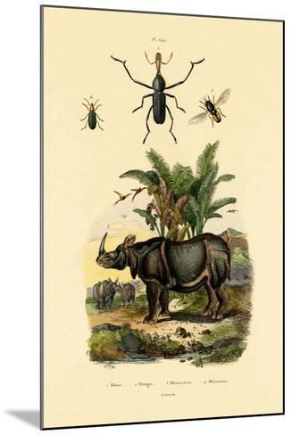 Hoverfly, 1833-39--Mounted Giclee Print