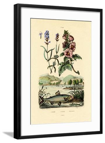Lavender, 1833-39--Framed Art Print