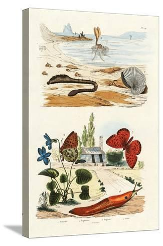 Lungworm, 1833-39--Stretched Canvas Print