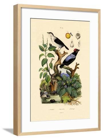Manakins, 1833-39--Framed Art Print