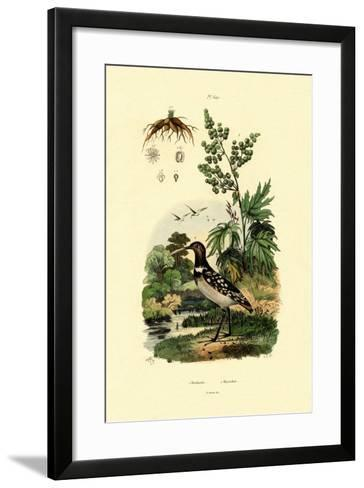 Rhubarb, 1833-39--Framed Art Print