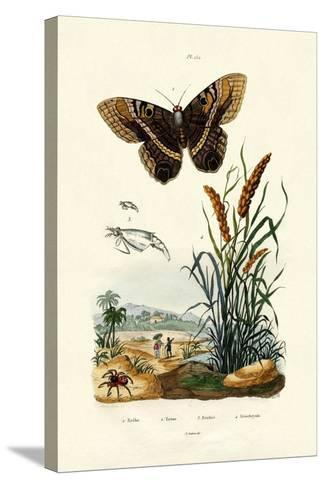 Ringlet, 1833-39--Stretched Canvas Print
