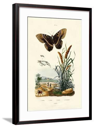 Ringlet, 1833-39--Framed Art Print