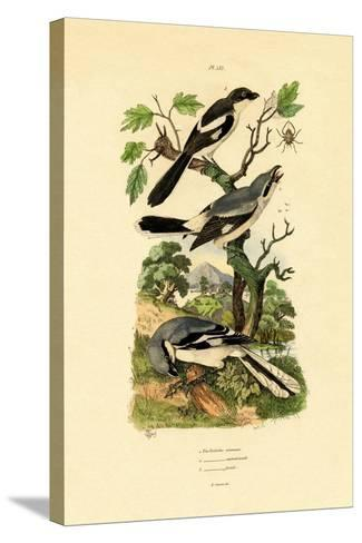 Shrikes, 1833-39--Stretched Canvas Print