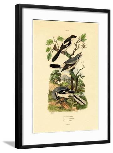 Shrikes, 1833-39--Framed Art Print