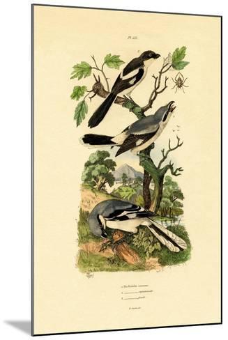 Shrikes, 1833-39--Mounted Giclee Print
