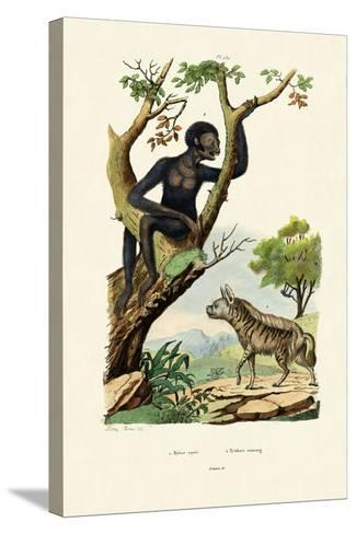Siamang, 1833-39--Stretched Canvas Print