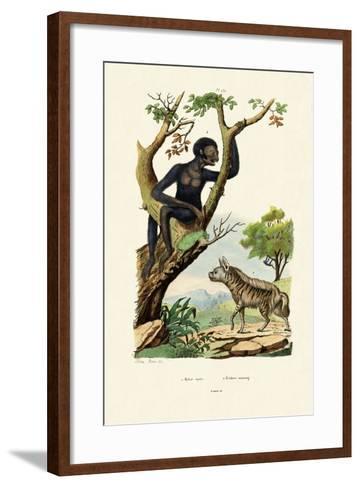 Siamang, 1833-39--Framed Art Print
