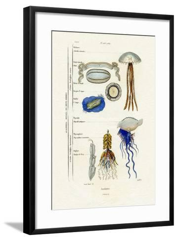 Jellyfish, 1833-39--Framed Art Print