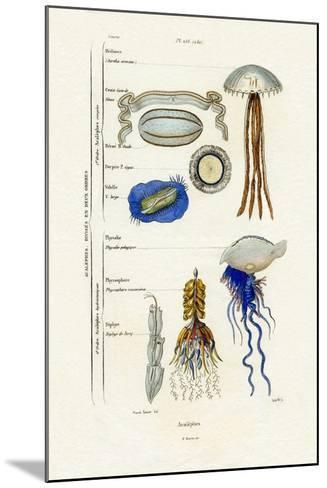 Jellyfish, 1833-39--Mounted Giclee Print