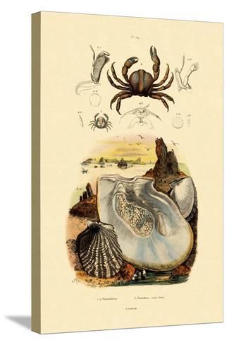 Pea Crab, 1833-39--Stretched Canvas Print