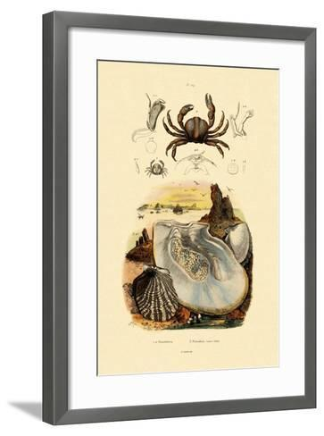 Pea Crab, 1833-39--Framed Art Print