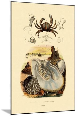 Pea Crab, 1833-39--Mounted Giclee Print