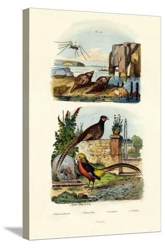 Pheasant, 1833-39--Stretched Canvas Print