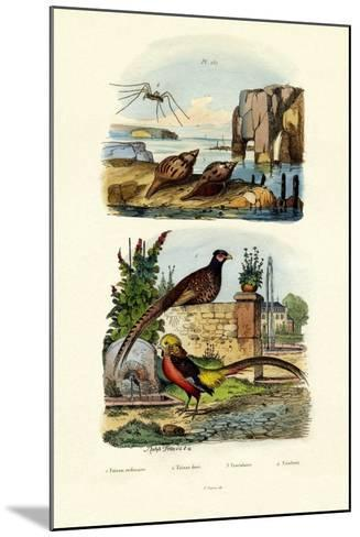 Pheasant, 1833-39--Mounted Giclee Print