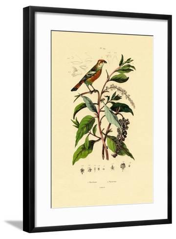 Pokeweed, 1833-39--Framed Art Print