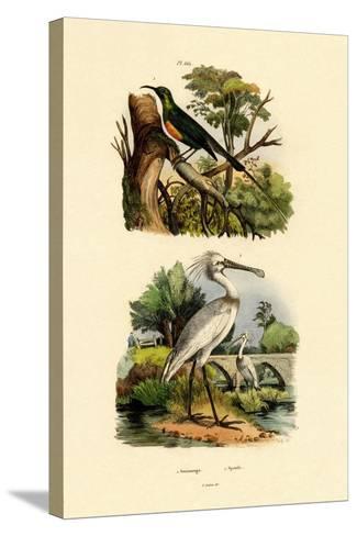 Sunbird, 1833-39--Stretched Canvas Print