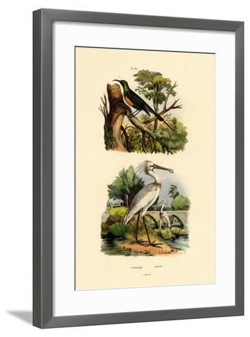Sunbird, 1833-39--Framed Art Print