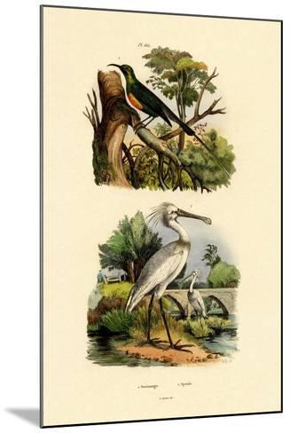 Sunbird, 1833-39--Mounted Giclee Print
