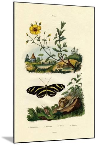 Sunrose, 1833-39--Mounted Giclee Print