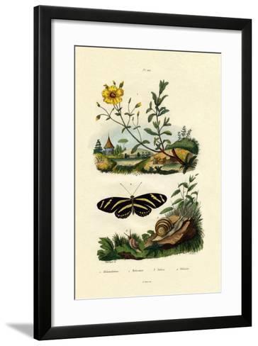Sunrose, 1833-39--Framed Art Print