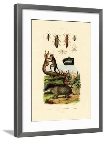 Tarsier, 1833-39--Framed Art Print