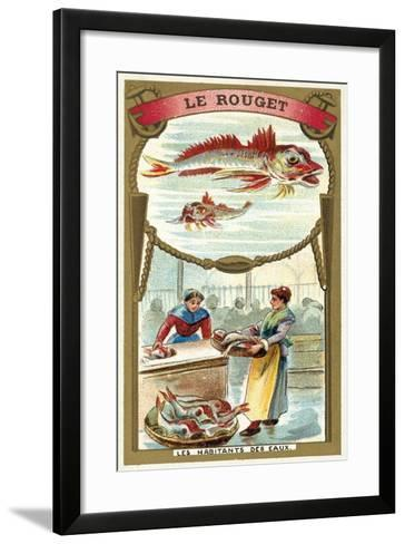 Red Mullet--Framed Art Print
