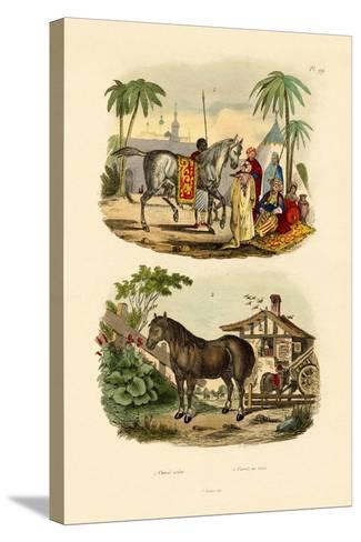Arab Horse, 1833-39--Stretched Canvas Print