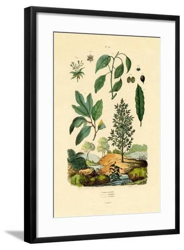 Bay Laurel, 1833-39--Framed Art Print