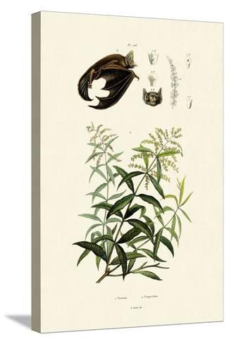 Lemongras, 1833-39--Stretched Canvas Print