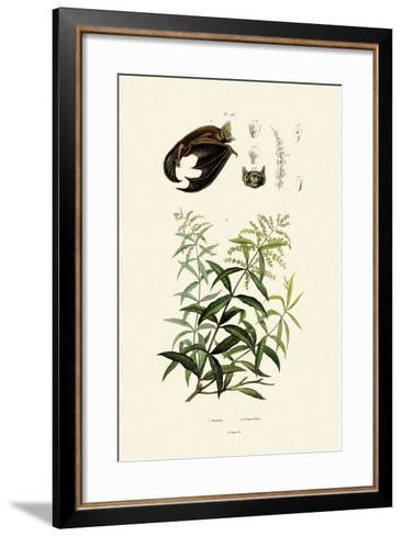 Lemongras, 1833-39--Framed Art Print