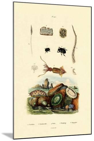 Sea Slug, 1833-39--Mounted Giclee Print
