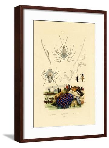 Sea Slug, 1833-39--Framed Art Print