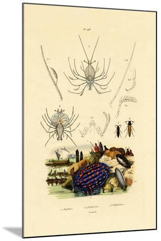 Sea Slug, 1833-39--Mounted Giclee Print