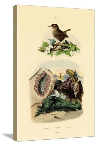 Sea Slug, 1833-39--Stretched Canvas Print