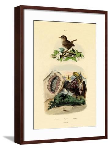 Sea Slug, 1833-39--Framed Art Print