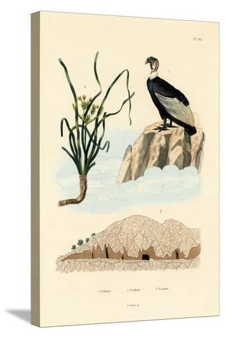 Vulture, 1833-39--Stretched Canvas Print