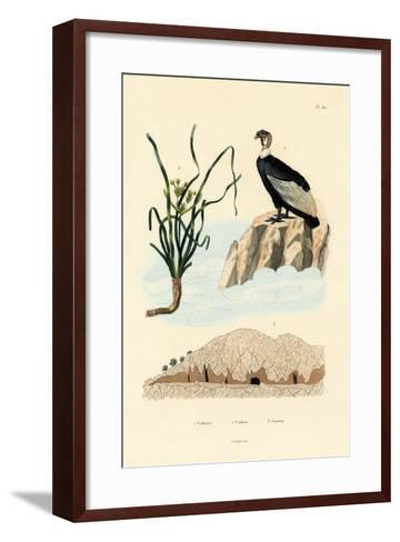 Vulture, 1833-39--Framed Art Print