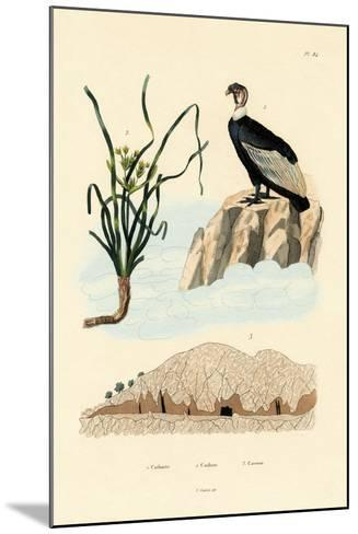 Vulture, 1833-39--Mounted Giclee Print