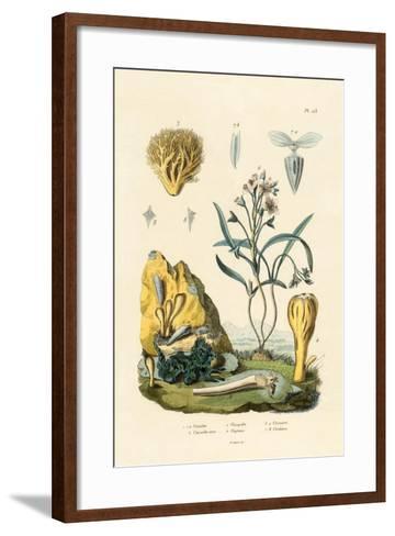 Door Snail, 1833-39--Framed Art Print