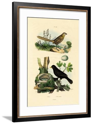 Fairy-Wren, 1833-39--Framed Art Print