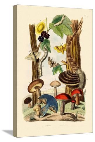 Mushrooms, 1833-39--Stretched Canvas Print