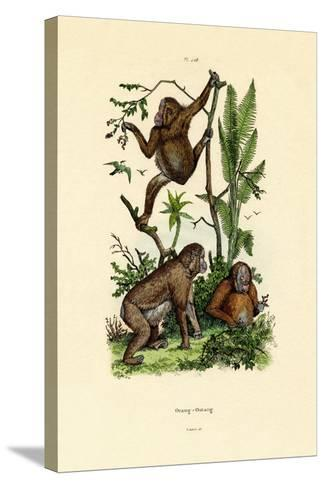 Orangutan, 1833-39--Stretched Canvas Print