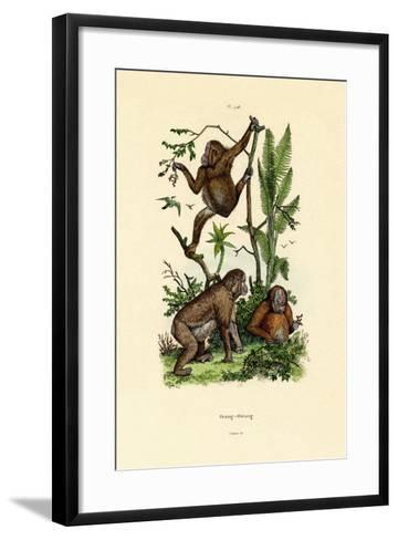 Orangutan, 1833-39--Framed Art Print