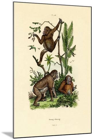 Orangutan, 1833-39--Mounted Giclee Print