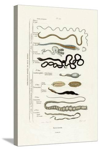 Parasites, 1833-39--Stretched Canvas Print