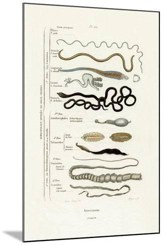 Parasites, 1833-39--Mounted Giclee Print